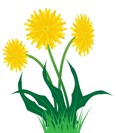 Mooie gele bloemen van de paardebloem ontspruit uit het gras