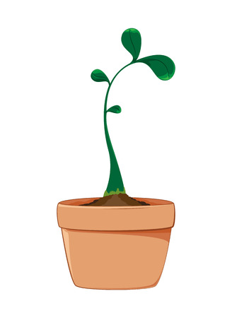growing plant: Growing Plant
