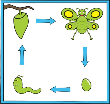 metamorphosis: Represent butterfly life cycle from an egg into a green cute butterfly