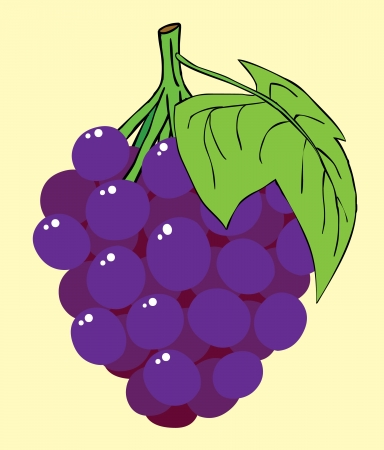 Represent a bunch of purple grapes   Well layered vector EPS 8 file Vector
