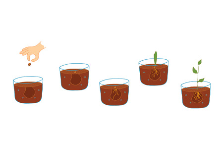 growing plant: growing plant process Illustration