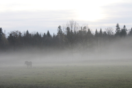 Misty morning in-field with a horse