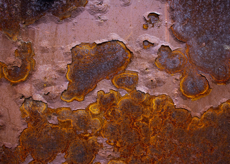 An old ferrous surface is covered by a blight