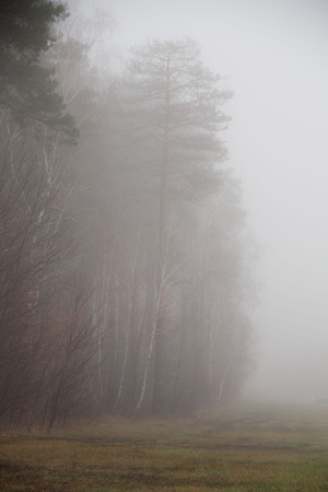 fog in forest after rain. green forest with fog  photo