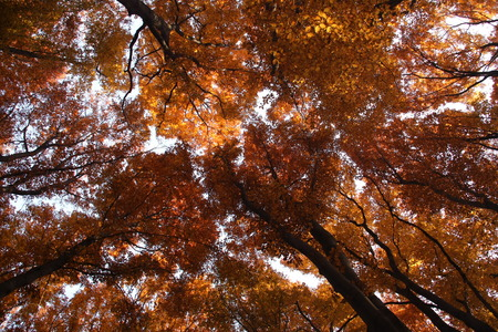 Autumn trees pattern against sky. Tree canopy in autumn forest. photo
