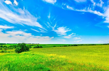Field of bright fresh green grass and blue sky