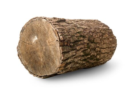 Pine log isolated on a white background