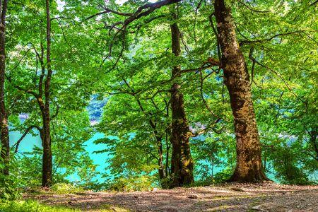 Forest on Biogradskoe lake Imagens