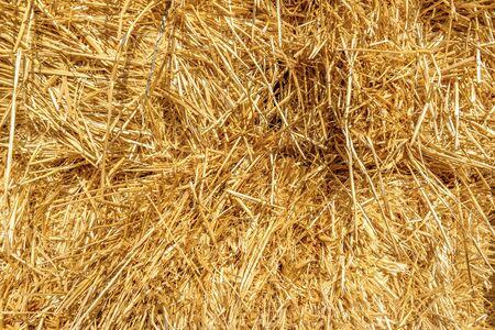 Background of bright orange hay close up