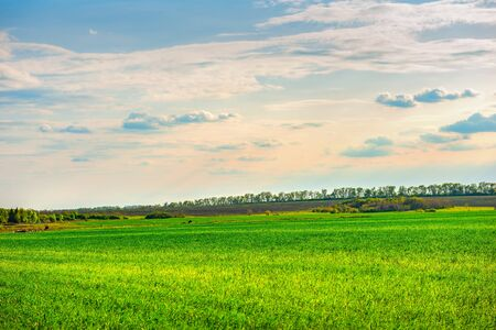 Green field and cloudy sunset in countryside