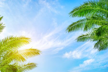 Background of the palm trees and sun in the blue cloudy sky, bottom view