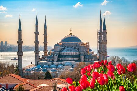Blaue Moschee und Tulpen