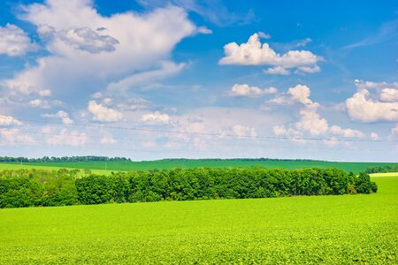 Trees on a green field and bright cloudy sky at summer