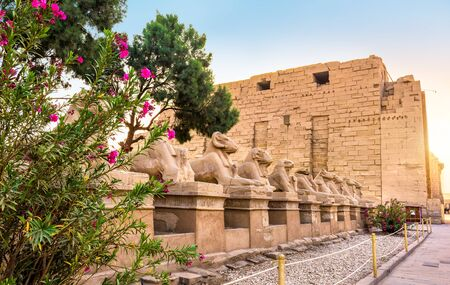 Sphinxes and flowers background.