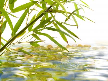 bamboo garden Stock Photo - 14540830