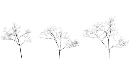bareness: Collection of trees silhouettes without leaves. Branches. Illustrated eps vector Illustration