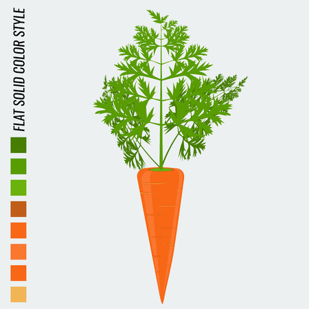 solid color: Fresh carrot, flat solid color style, realistic leaf healthy food Illustration