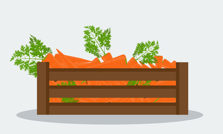 Fresh organic carrot in wooden crate, flat solid color style, realistic leaf healthy food, vector icon Illustration