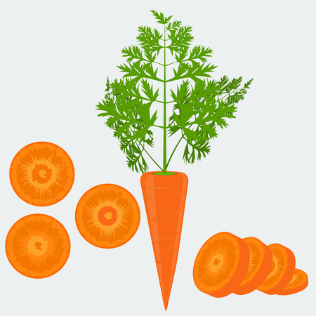solid color: Vegetable organic food fresh and sliced carrot isolated on white background vector illustration. Flat and solid color design.