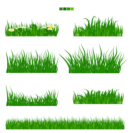 sedge: Illustrated vector green Grass with flower and leaf set with solid flat color. Long and short grass collection