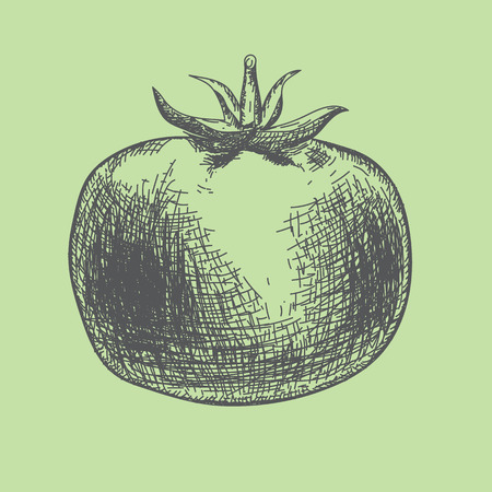 Hand drawn tomato. Organic and healthy eco food theme with scketch style.