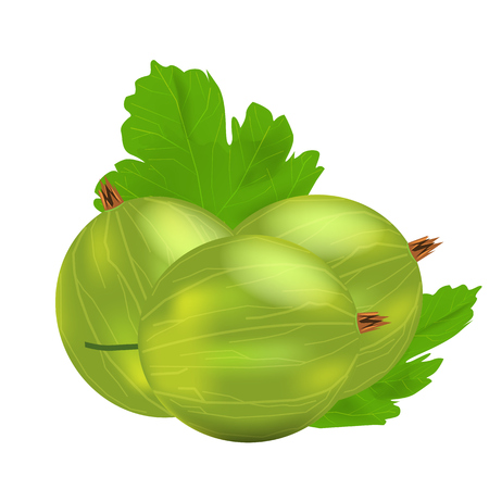 Three realistic 3d amla or Indian gooseberry mockup with green leaf. Isolated on white background. Illustrated vector.