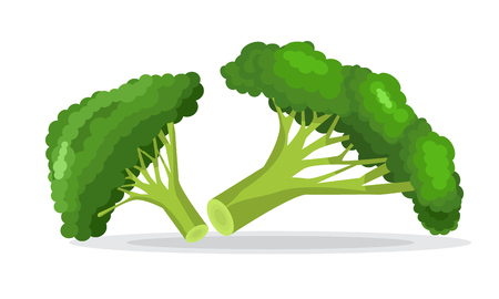 Bright vector collection of colorful broccoli. Flat and solid color style illustrated vector.