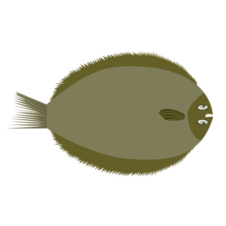 Brill, european flat fish. Flat and solid color style vector illustration.