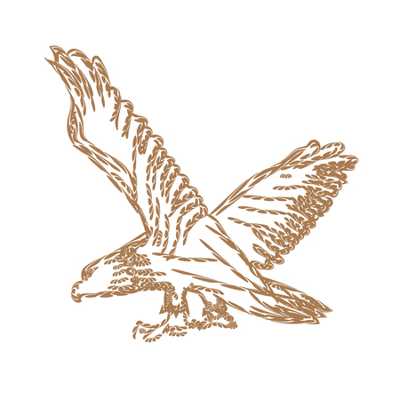 Bald Eagle With Spreaded Wings for symbol or logo design. Line art style Vector illustration.