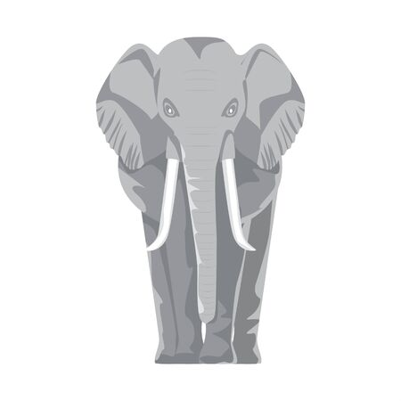 African safari elephant with front view. Flat and solid color style vector illustration.