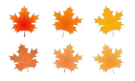 Group of Single Autumn leaf with different color. Set of Autumn maple leaf with shadow. Vector illustration Foto de archivo - 131980185