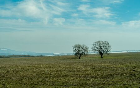 Two bare trees on large meadow landscape. Gloomy and sad field view.