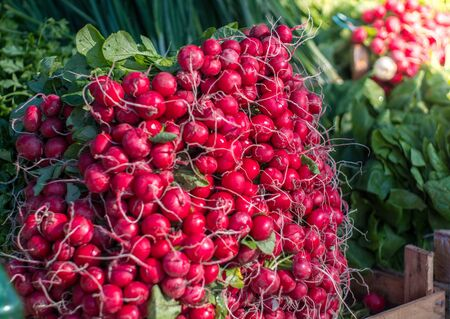 Group of or Freshly harvested, red radish. Stack of Vibrant red radish on market or bazar with green leaves in background.