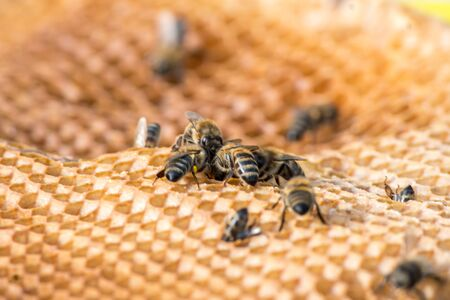 Bees on honeycomb in apiary shot with soft focus. Bee hive concept. Imagens - 132225042
