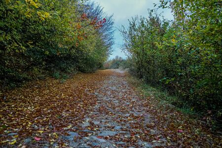 Road in autumn. Mistic foggy morning. Coloured leaves in ground.
