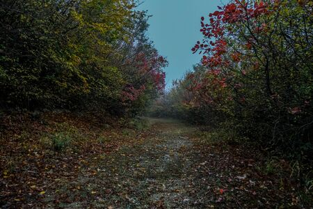 Road in autumn. Mistic foggy morning. Coloured leaves in ground. Mistic scenery landscape photography. Stock Photo