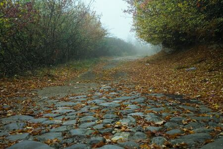 Road in autumn. Mistic foggy morning. Coloured leaves in ground. Stone road. Mistic scenery landscape photography.
