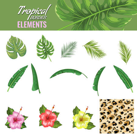 Tropical leaves and flowers set. Lion skin. Hand drawn leaves flat and solid color vector illustration. Ilustração