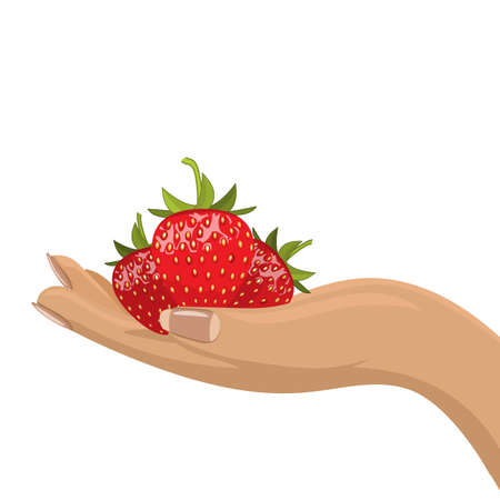 Hands holding red ripe strawberries. Flat and solid color vector illustration.