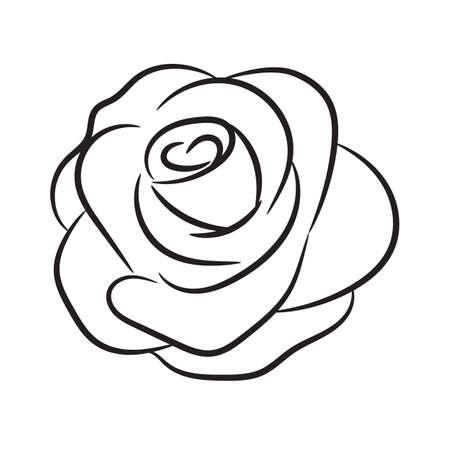 Rose flower head with line art outline. Hand drawn vector illustration. Illustration