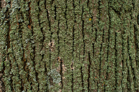Pattern of lichen moss and fungus growing on a bark of a tree in forest. Different types of old trees growing in a wood. Stock Photo