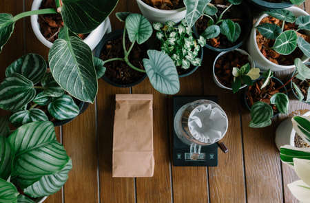 Top View of Hand Drip Coffee,Barista Tools, Digital Scale and brown paper bag package of craft coffee with among plants at home garden.Drip coffee flat lay.
