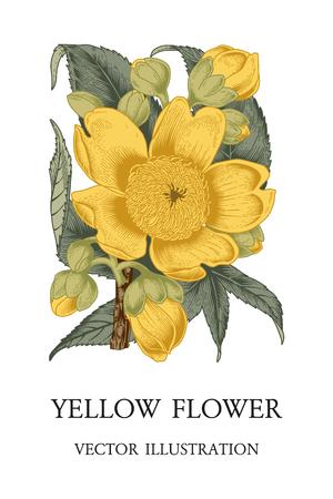 Flower. Vector Vintage Illustration. Botanical theme.