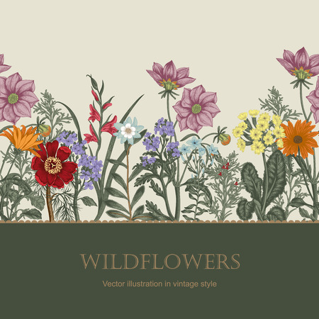 Summer flowers. Wildflowers. Vector Vintage postcard. Vegetable pattern. Botanical theme.