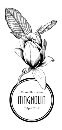 Magnolia. Flowers. Vector illustration in vintage style. Greeting card with flowers. Botany. Blooming trees.