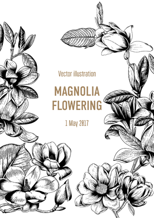 Magnolia. Flowers. Flowering of trees. Spring. Vector Vintage postcard. Illustration with plants. Botany.