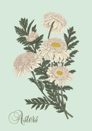 Flowers. Asters. Summer bouquet. Vector illustration in vintage style. Botany. Elegant card.