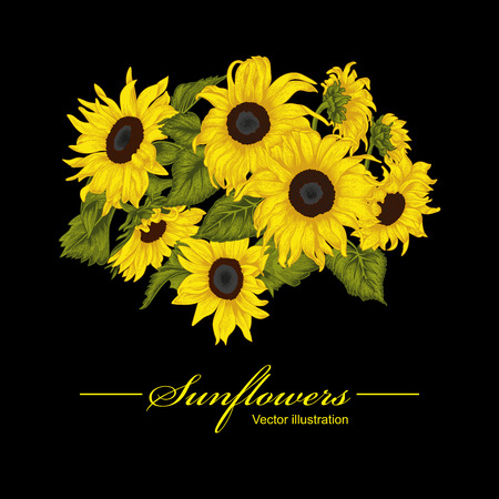 Sunflowers. Vector illustration in vintage style. Illustration