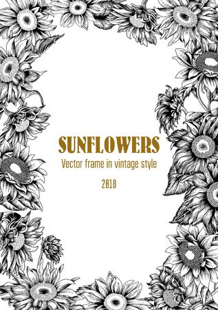 Sunflowers. Vector illustration in vintage style. Frame.