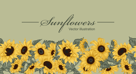 Sunflowers. Vector illustration in vintage style. Seamless background. 矢量图像